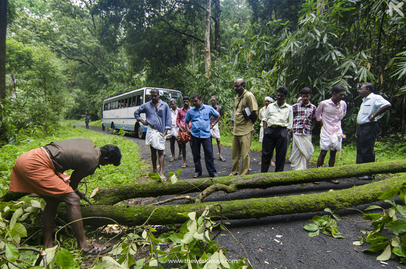 A Native Cutting The Tree to Clear The Way For KSRTC