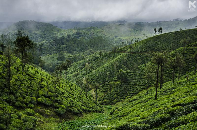 Inside a Tea Estate at Malakkappara
