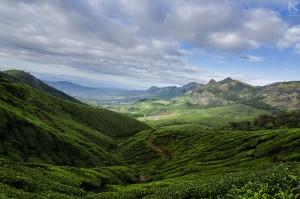 A vast view of tea plantations at Kolukkumalai, the World's highest tea plantations