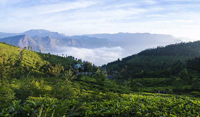 View of The World's Highest Tea Factory