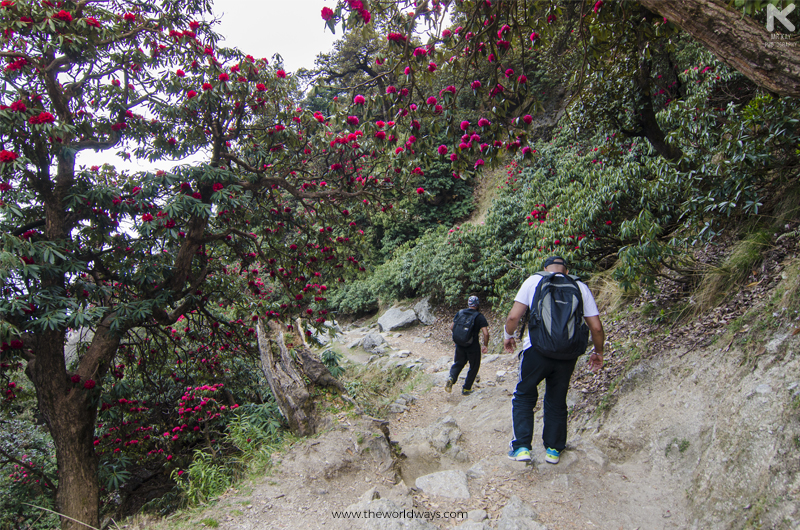 Trekking Down Triund