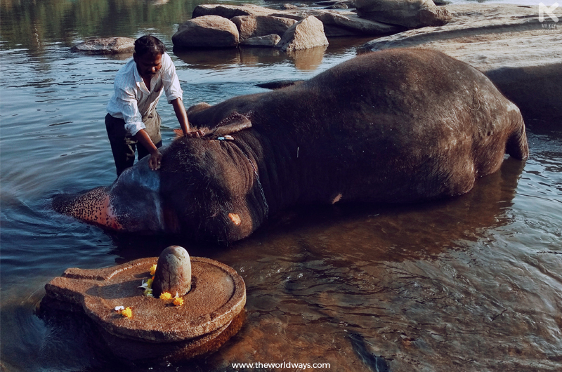 Lakshmi, the elephant at Virupaksha Temple taking her morning bath in Tungabhadra River